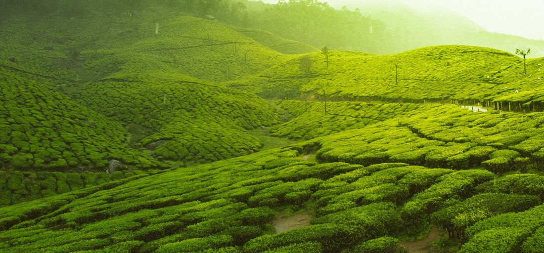 Munnar, Kerala - Best hill stations in India